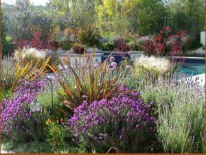 giardino-mediterraneo_ng1